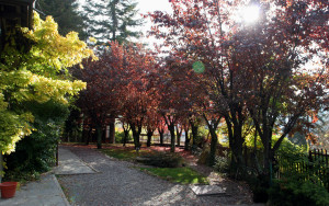 giardino-img_1253